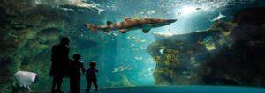 visiter aquarium de la rochelle